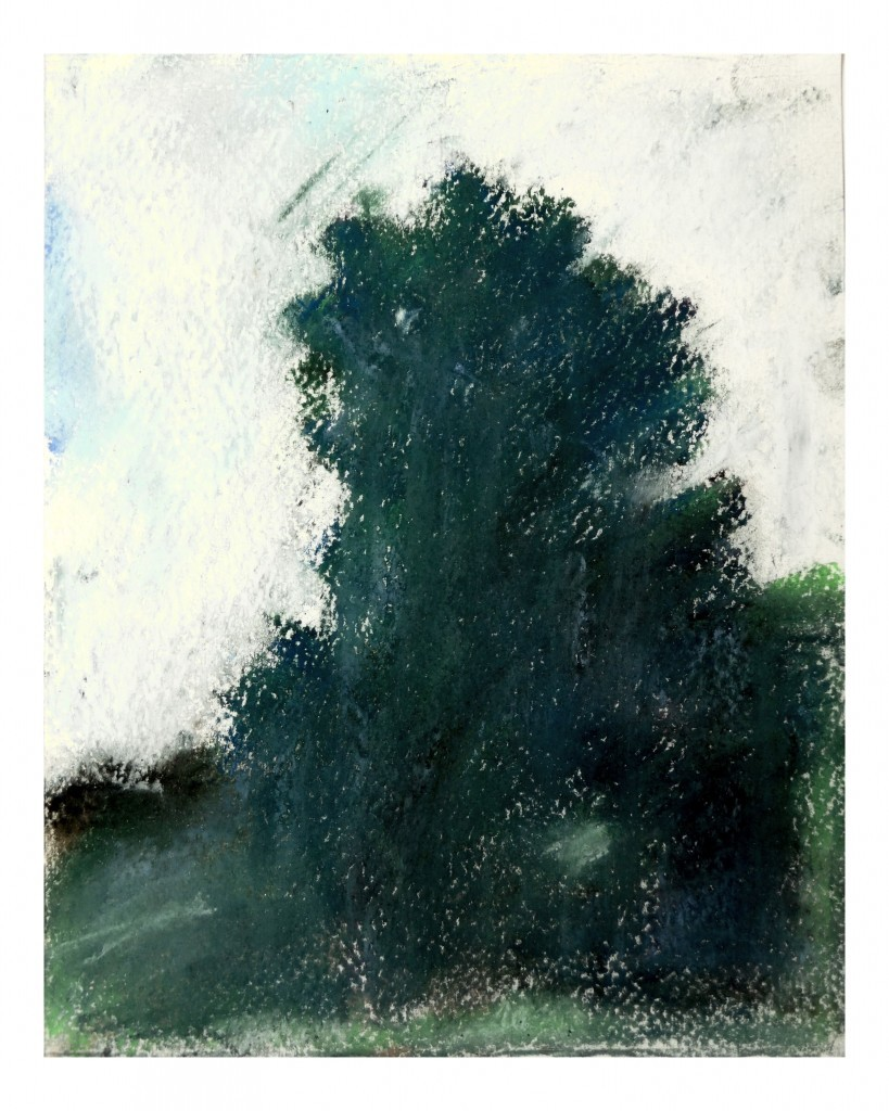 Sérült tölgy,pasztell,papir, 2015