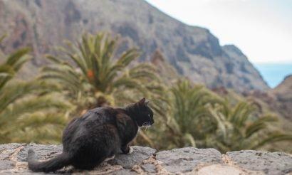 Sziget a határon – Tenerife